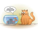Cat&Fish; wonen in de bebouwde kom.
