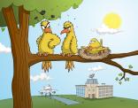 Vogels en vliegtuigen gaan niet echt goed samen...